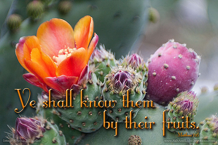 Know Them by Their Fruits