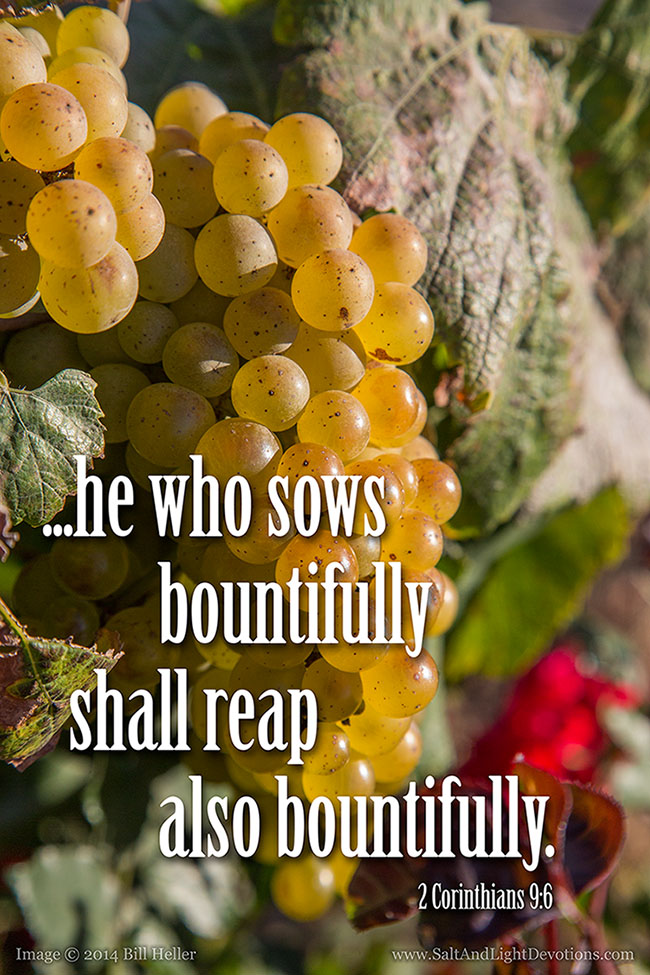 Sow Bountifully