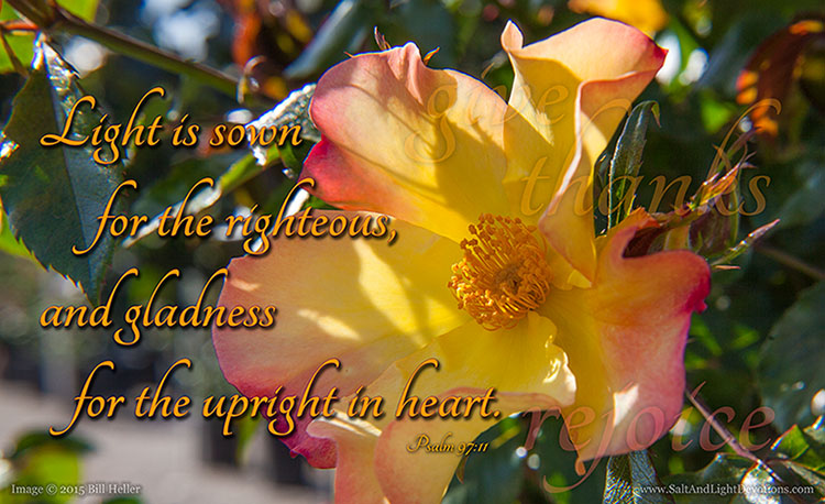 Of Light And Gladness